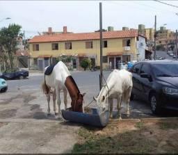 Título do anúncio: vendo 2 cavalos idade 4 anos .saudaveis..