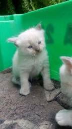 Gatinhos lindos com 30 dias