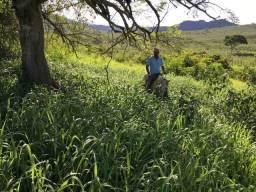 Fazenda de Gado linda de 882ha em Itapetinga Clima e solos Oportunidade