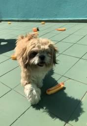 Espaço canino Vai viajar ? Vai sair ? Não deixe seu Pet sozinho ??