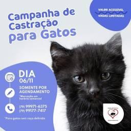 Título do anúncio: Castracao de gato por 70!!!