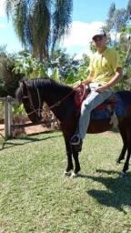 Cavalo, manso e rápido