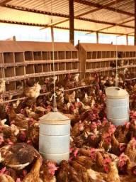 Ninhos de madeira para galinhas poedeiras.
