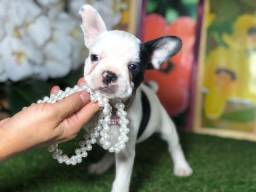 Título do anúncio: Bulldog Francês Fêmea Piratinha mini