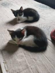 Título do anúncio: Gatos para doação