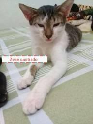 Gatinhos