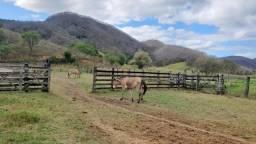 Fazenda 620 Alqueires próximo de Governador Valadares MG