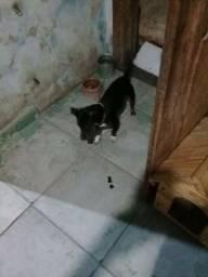 Cachorro Pinscher + casinha 220.00