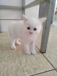 Título do anúncio: Lindas gatinhas