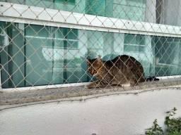 redes p gatos