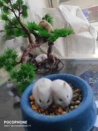 Título do anúncio: Hamsters filhotes