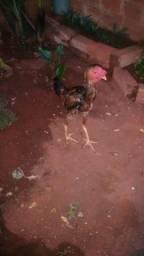Vendo frango