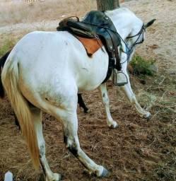 Égua aliando na esteira , com apenas 6 anos