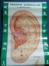 Mapas e Guias Corpo Humano