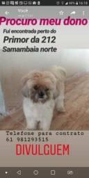 Dog ACHADO perdido procura DONO
