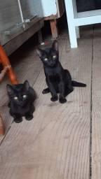 Gato Filhote p/ Adoção responsável -