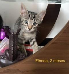Título do anúncio: doação de gata filhote