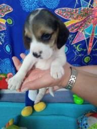 Meninas Beagle