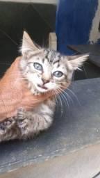 Título do anúncio: Gatinhos disponíveis p/ adoção.