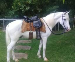 Título do anúncio: Cavalos mangalarga