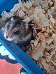 Hamster com Gaiola, bebedouro e vasilha de comida