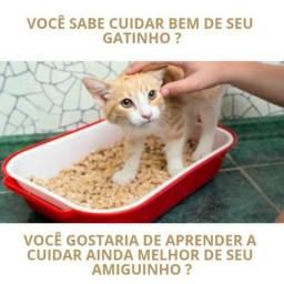 Como cuidar melhor de seu Gato