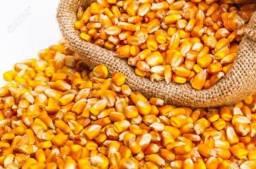 Milho em grãos ensacado 30 e 50kg