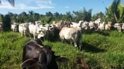Urgente* Fazenda de 55,5 alqueires a 38 km da Vila comunidade
