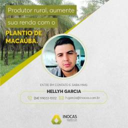Projeto Macaúba