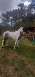 Título do anúncio: Vendo ou troco cavalo pampa