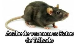 Controle de pragas , BMD SERVIÇOS detetização, roedores nunca mais