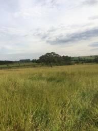 Imperdível fazenda 630 alqueiroes