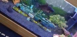 Enfeite par aquario