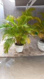Vendo Lindas plantas para ornamentação !