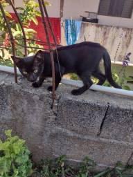 Título do anúncio: Gatos doação