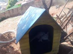 Título do anúncio: Casa cachorro