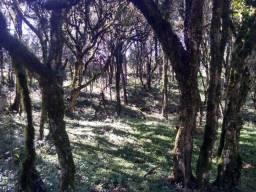 Título do anúncio: Terreno em Timbó Grande-SC
