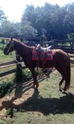 Vendo cavalo leia