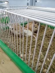 Vendo Gerbi, Esquilos da Mongólia