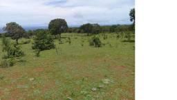 Galinha Morta, 1200 Hectares,500 Reses,Trator, porteira Fechada, Alto Paraguai ?MT