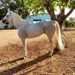 Cavalo/Garanhão