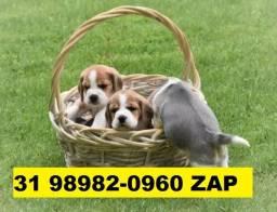Canil Os melhores Filhotes Beagle Basset Lhasa Poodle Yorkshire Shihtzu Maltês Fox