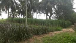 Fazenda com 23 hectares em Nísia floresta