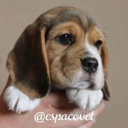 Beagle o snoop do desenho