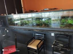 Título do anúncio: Lindo aquário