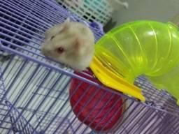 Título do anúncio: Hamster disponíveis