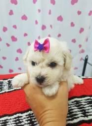 Poodle zero mini anão