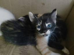 Gatinha para adoção, em arapiraca