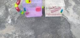 Duas gaiolas de hamster