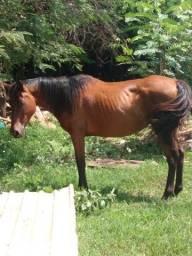 Título do anúncio: Vendo uma linda égua Boa pra lida com o gado